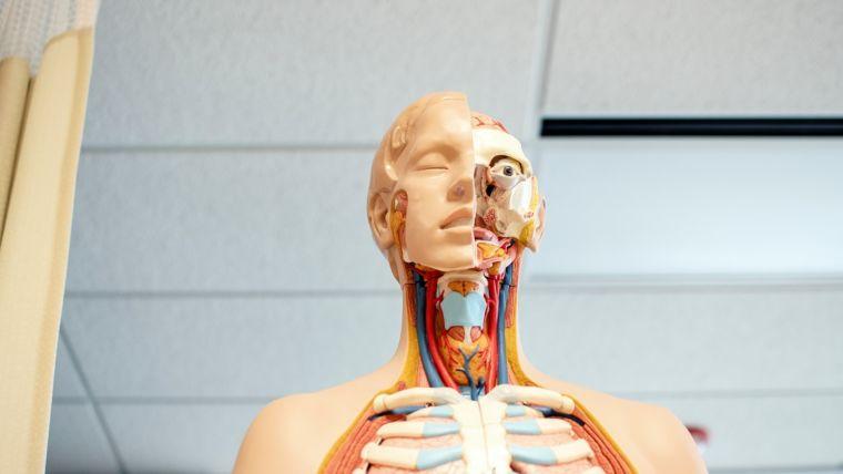 Hyperventilatie: Eerste hulp bij luchtledigheid